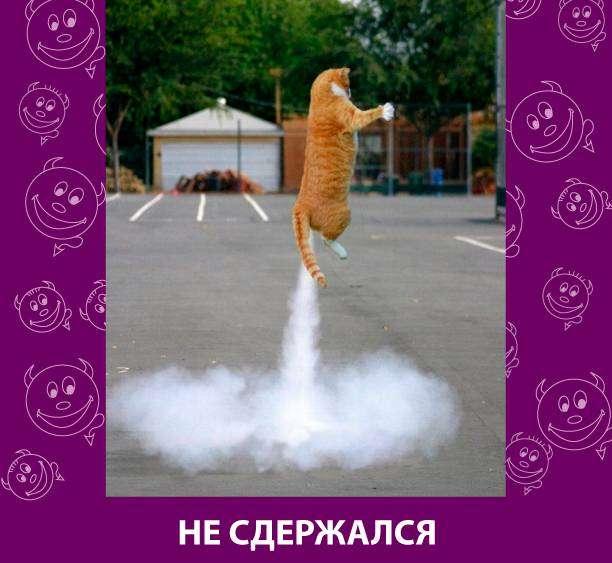 Приколняшка 549 #юмор #приколы #смешные картинки