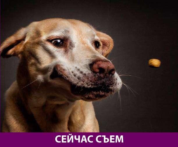 Приколняшка 571 #юмор #приколы #смешные картинки