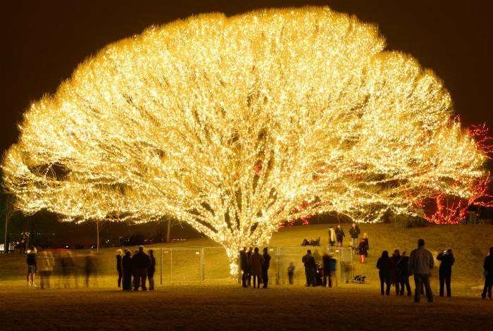 Дерево, украшенное тысячью огней.