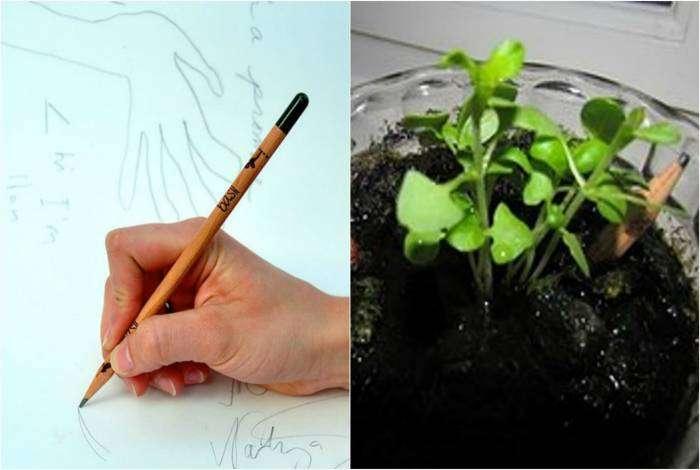 Уникальный карандаш, который можно посадить в горшочек и вырастить растение.