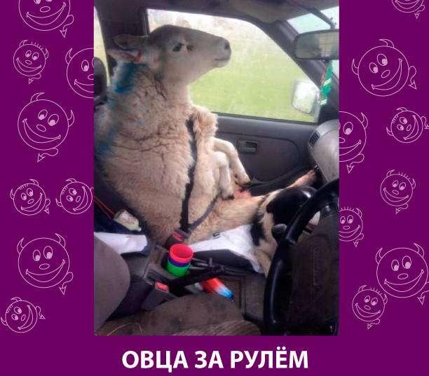 Приколняшка 564 #юмор #приколы #смешные картинки
