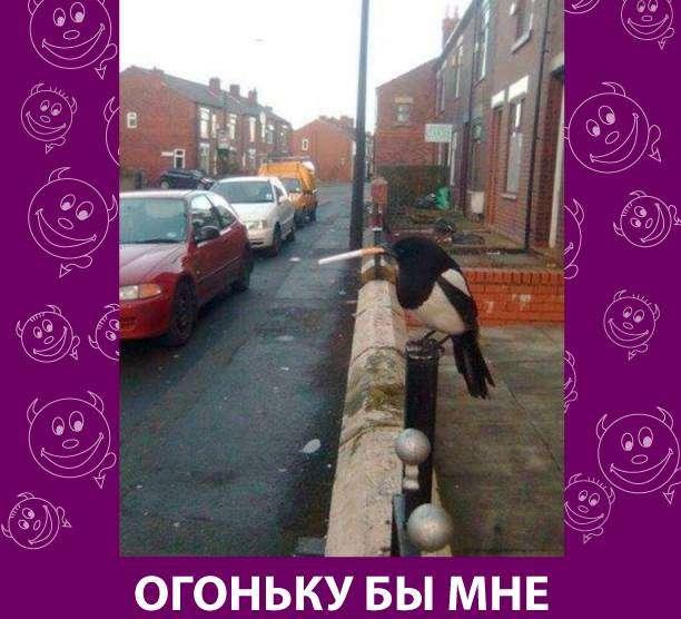 Приколняшка 609 #юмор #приколы #смешные картинки