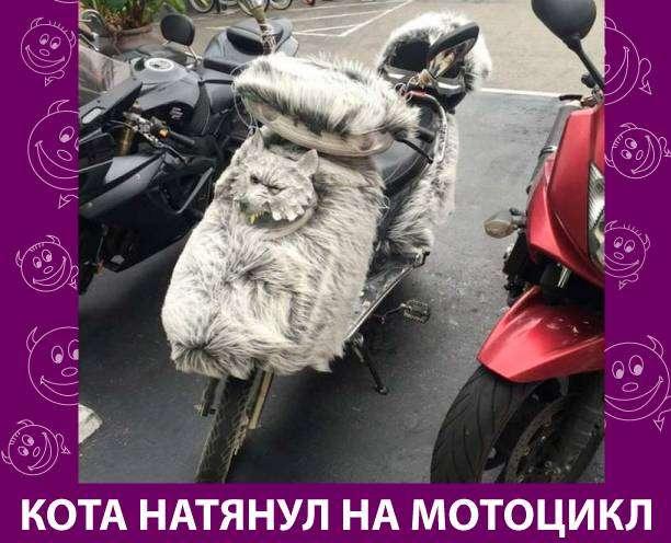 Приколняшка 610 #юмор #приколы #смешные картинки