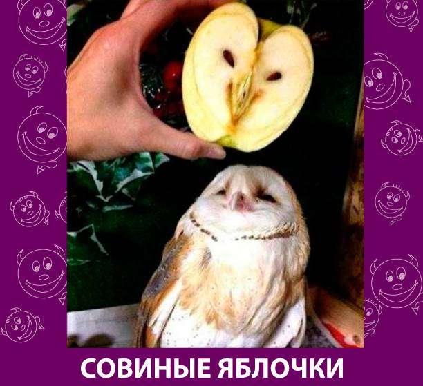 Приколняшка 651 #юмор #приколы #смешные картинки