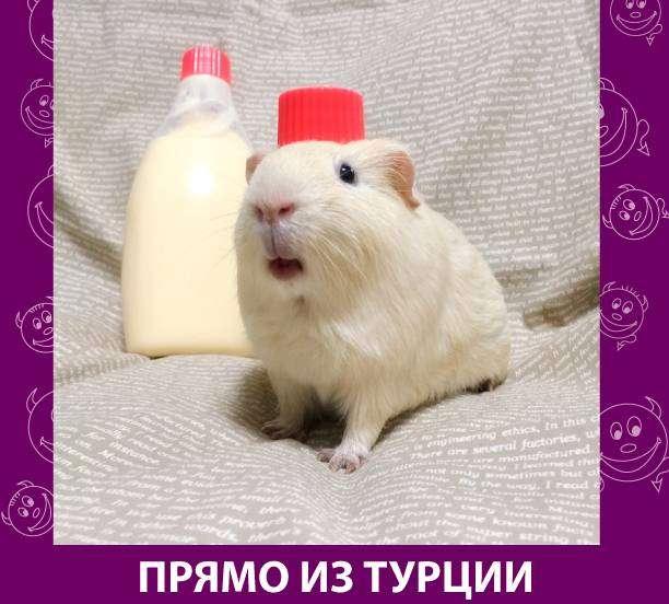 Приколняшка 654 #юмор #приколы #смешные картинки