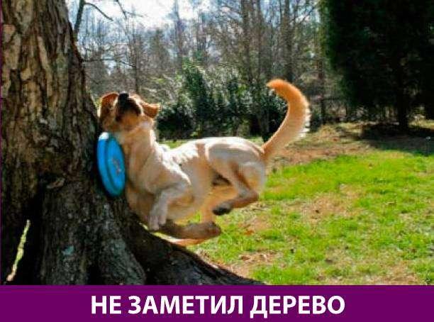 Приколняшка 690 #юмор #приколы #смешные картинки