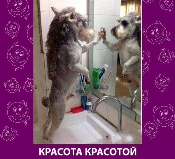Приколняшка 696 #юмор #приколы #смешные картинки