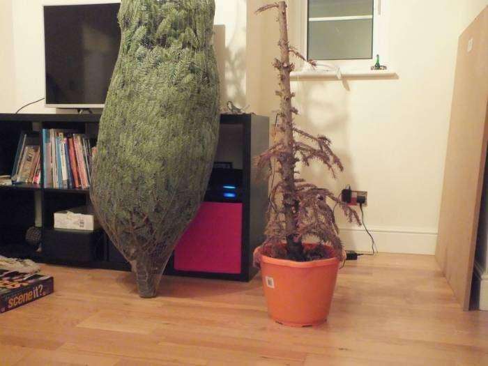 «Похоже, все таки придется выкинуть старую елку... А ведь она была с нами целый год!»