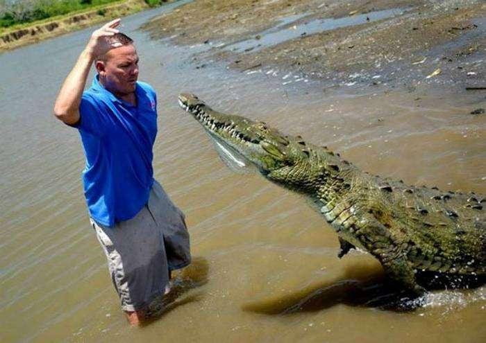 Безобидный крокодильчик.