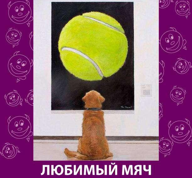 Приколняшка 706 #юмор #приколы #смешные картинки