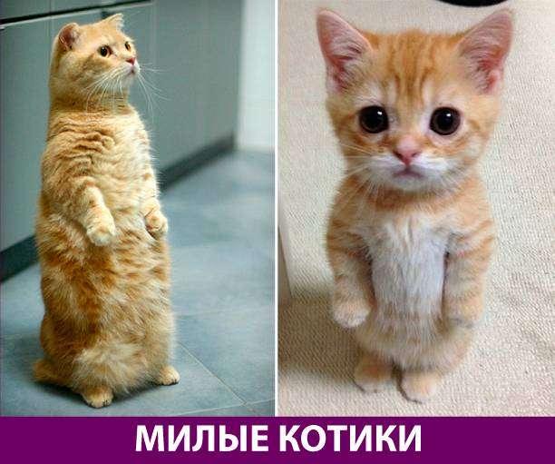 Приколняшка 719 #юмор #приколы #смешные картинки
