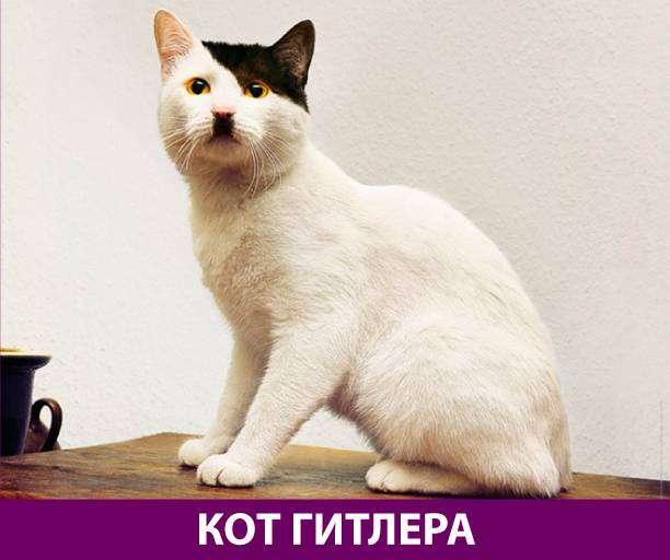 Приколняшка 724 #юмор #приколы #смешные картинки