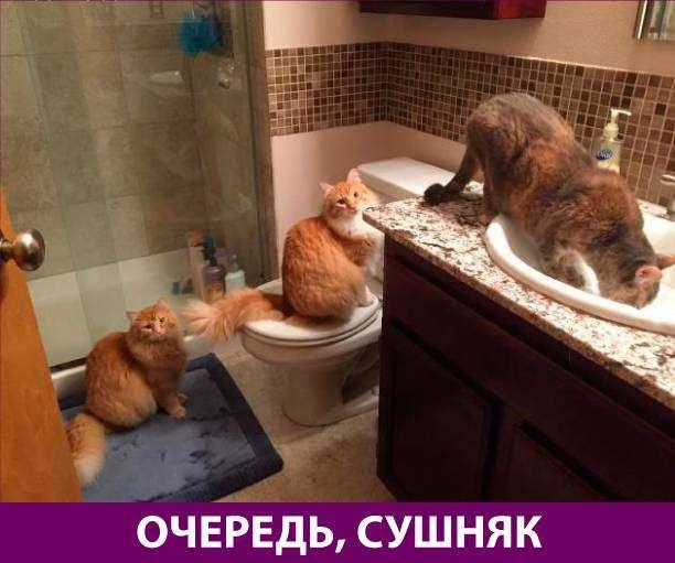 Приколняшка 727 #юмор #приколы #смешные картинки