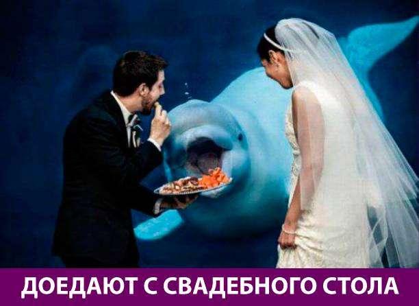 Приколняшка 729 #юмор #приколы #смешные картинки