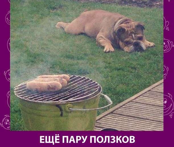 Приколняшка 575 #юмор #приколы #смешные картинки