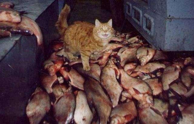 Коты-герои. Пять самых отважных котов современности