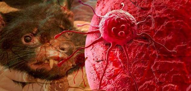 Ученые обнаружили новый вид рака, которым можно заразиться