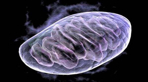 Десять сенсационных научно-технических открытий 2015 года