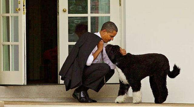 Предотвращено коварное похищение собаки Обамы