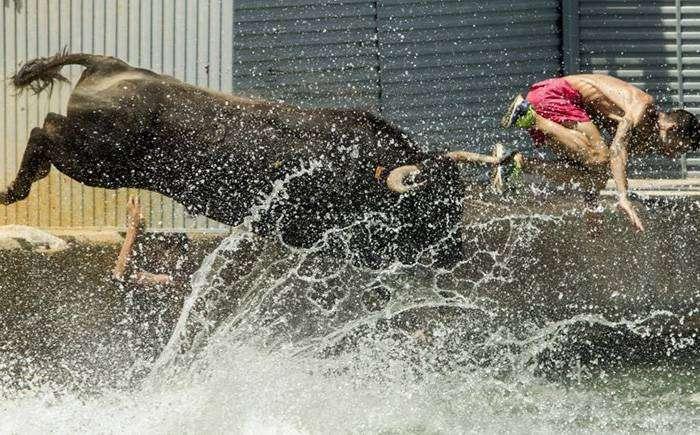 Фестиваль: быки в море – Дения, Испания