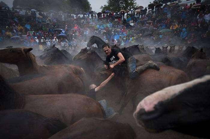Укрощение лошадей – Сабуседо, Испания