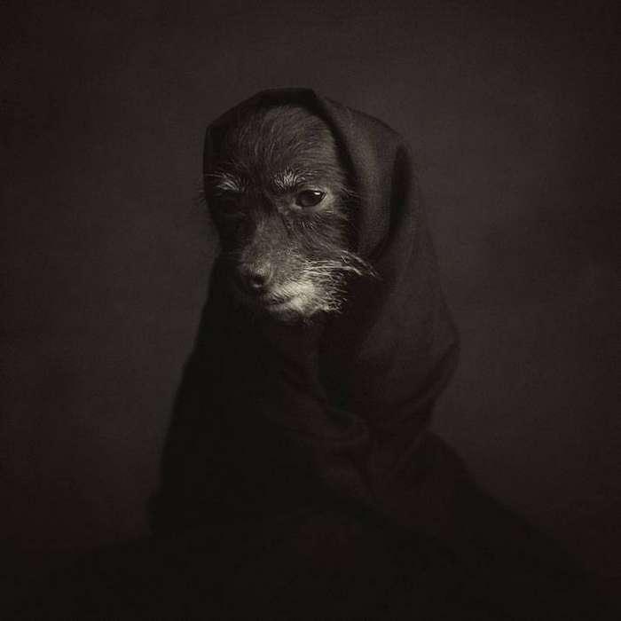 13 потрясающих портретов животных с человеческими эмоциями 2