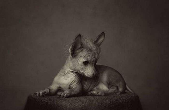 13 потрясающих портретов животных с человеческими эмоциями 3