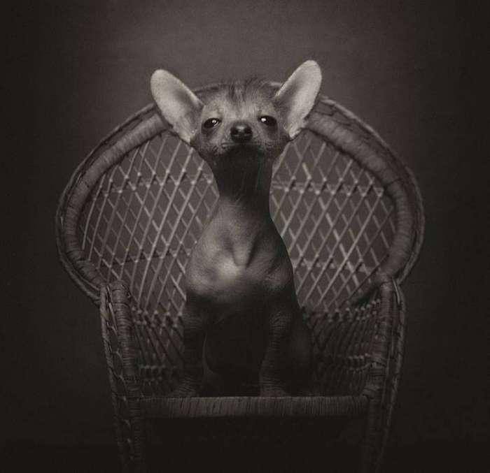 13 потрясающих портретов животных с человеческими эмоциями 8