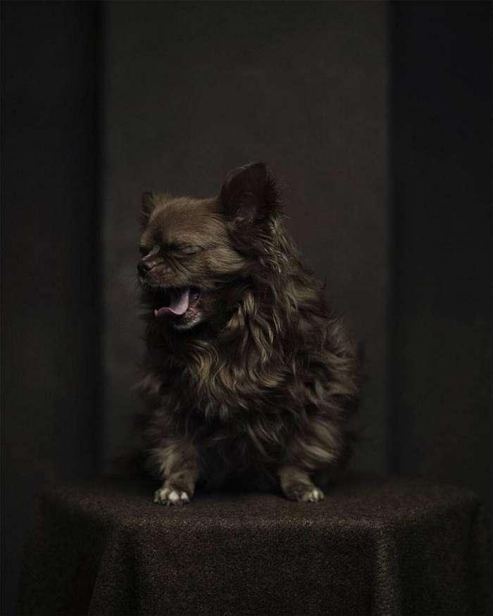 13 потрясающих портретов животных с человеческими эмоциями 9