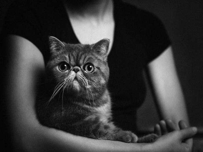 13 потрясающих портретов животных с человеческими эмоциями 11