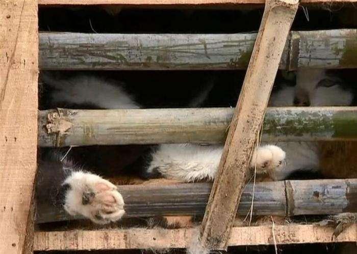 Активисты спасли 2 тысячи котов (9 фото)