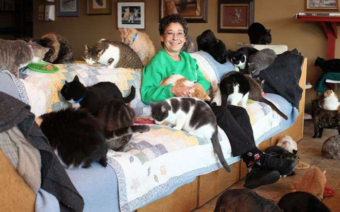 История женщины, которая живет с 1100 котами (8 фото)