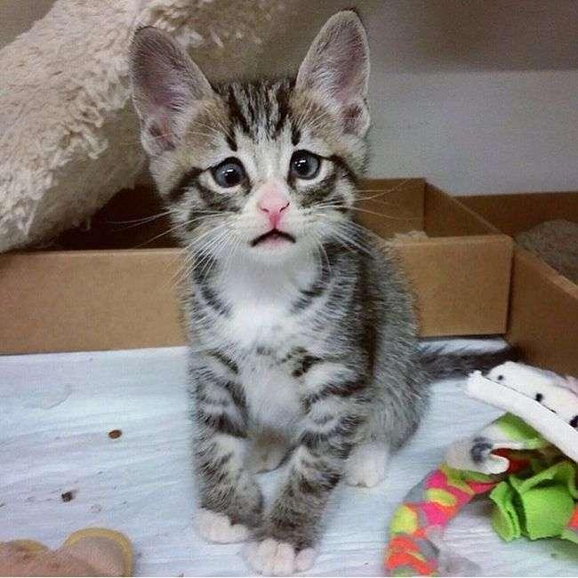 Очаровательный котенок с «взволнованным взглядом» (5 фото)
