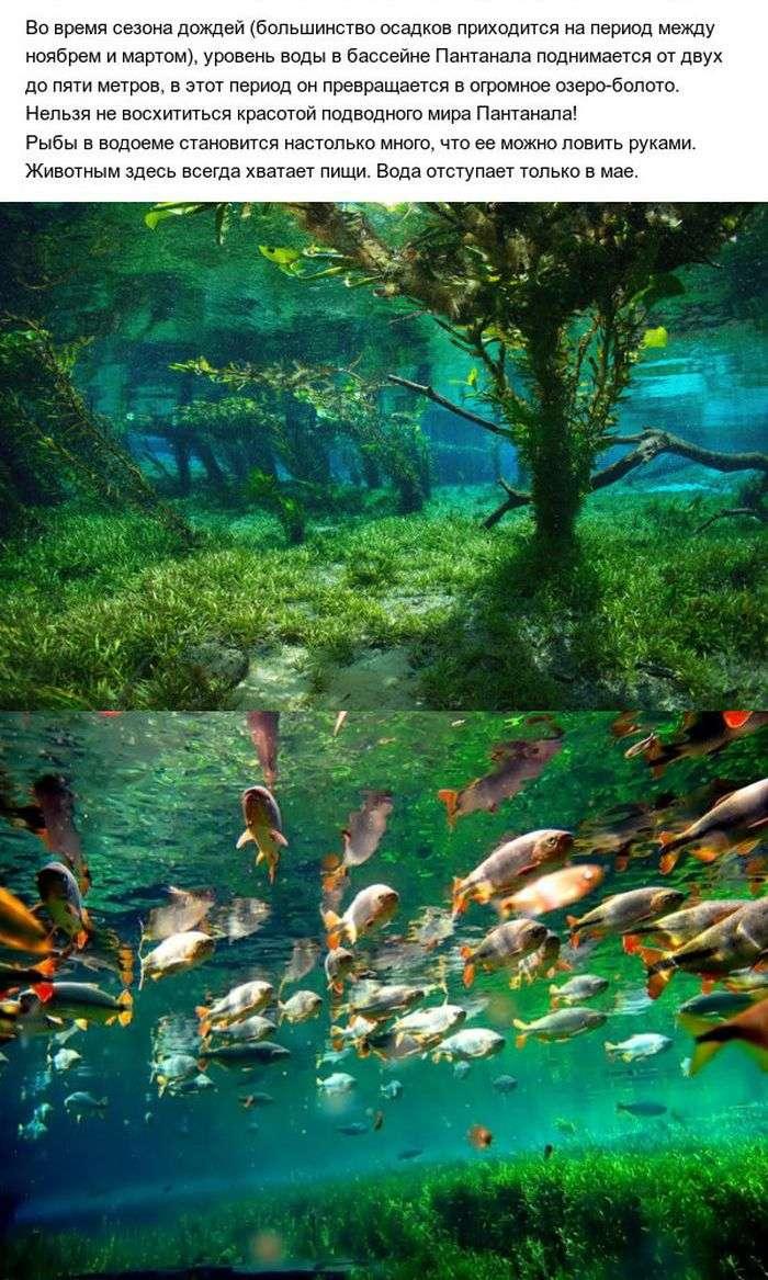 Пантанал - настоящий рай на земле (10 фото)