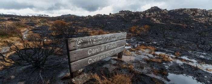Тасмания пострадала от сильнейшего лесного пожара (16 фото)