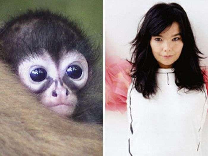 Животные и знаменитости (22 фото)