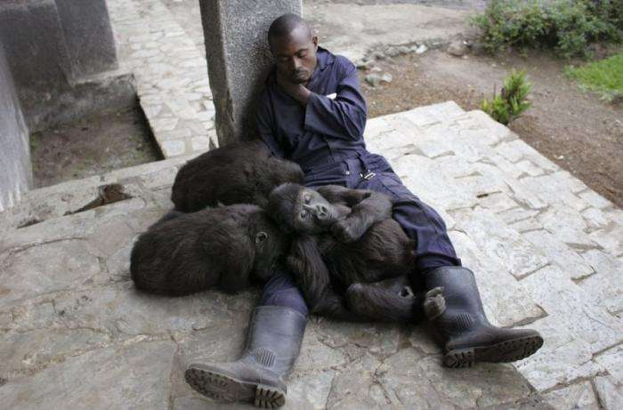 Жизнь в Конго (29 фото)