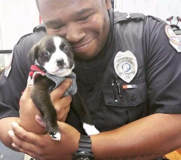 Чувствительный полицейский (2 фото)