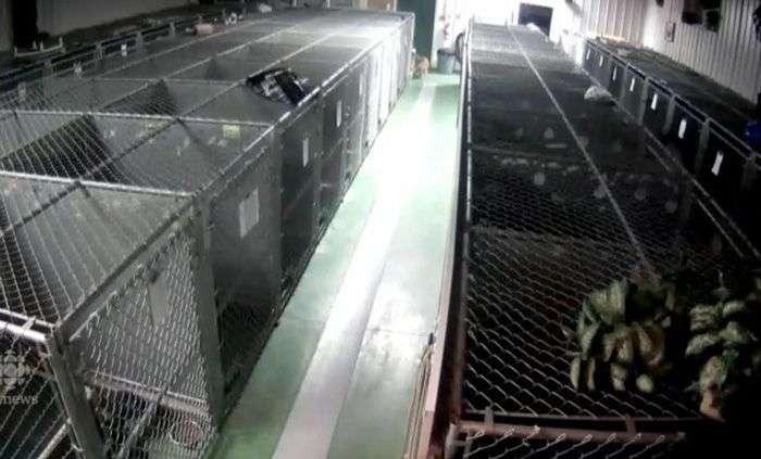 Побег собаки из клетки (5 фото)