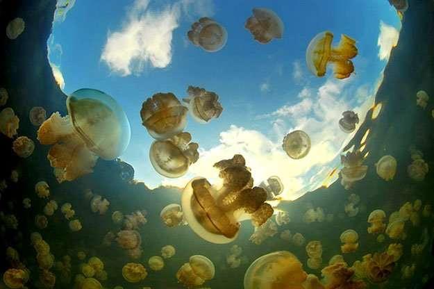 Озеро медуз (3 фото)