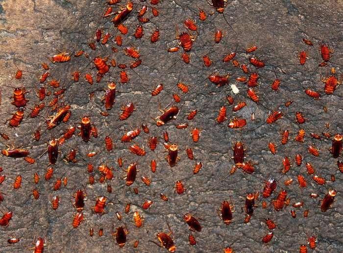 Пещеры ужаса Гомантонга (11 фото)