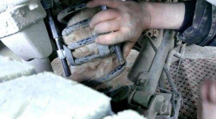 Водитель обнаружил в пружине подвески кота (6 фото)