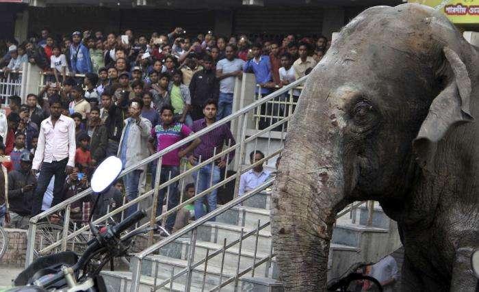 Взбесившийся слон (10 фото)