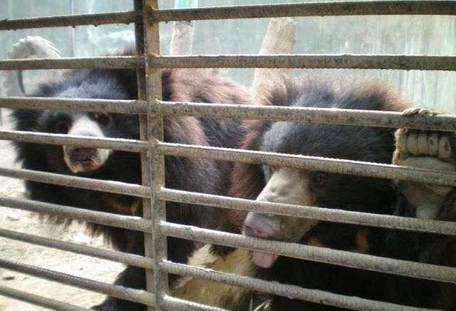 Домашний зоопарк (9 фото)