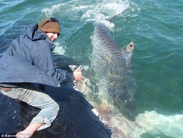 Погладить акулу (4 фото)