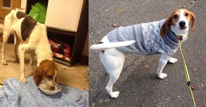 Собаки в приюте и в семье (25 фото)