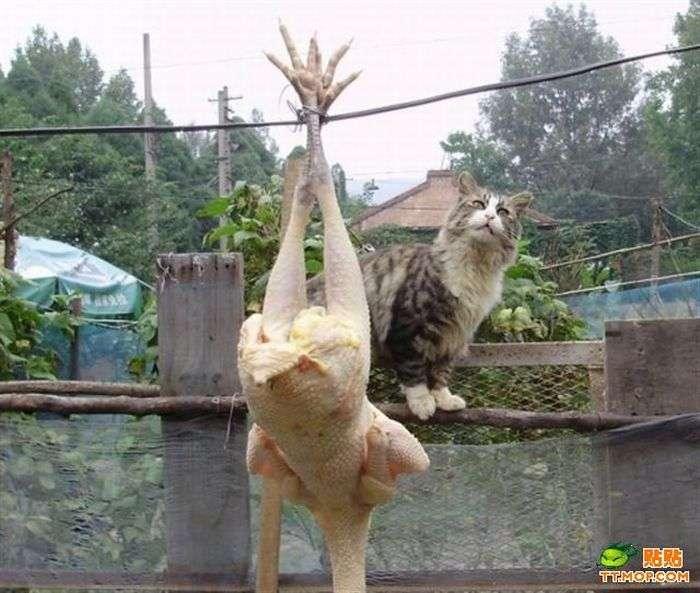 Голодный котик (9 фото)