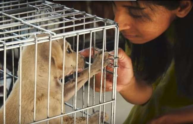 Мужчина 10 лет копил деньги, чтобы помочь бездомным животным (6 фото)