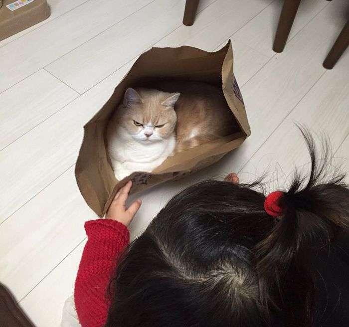 Коюки - новый хмурый кот, покоривший пользователей сети (14 фото)
