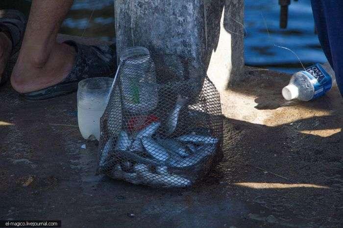 Нехитрое вьетнамское приспособление для рыбной ловли (7 фото)
